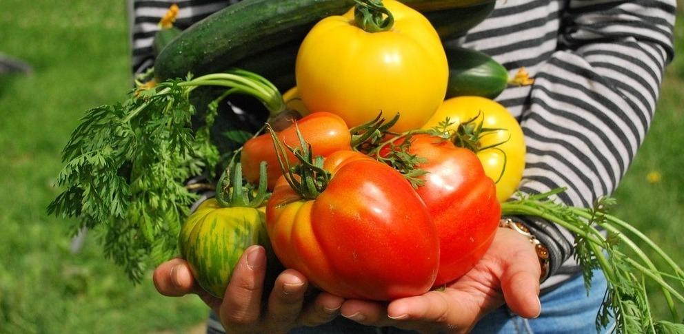 Manger ses légumes cultivés à la maison