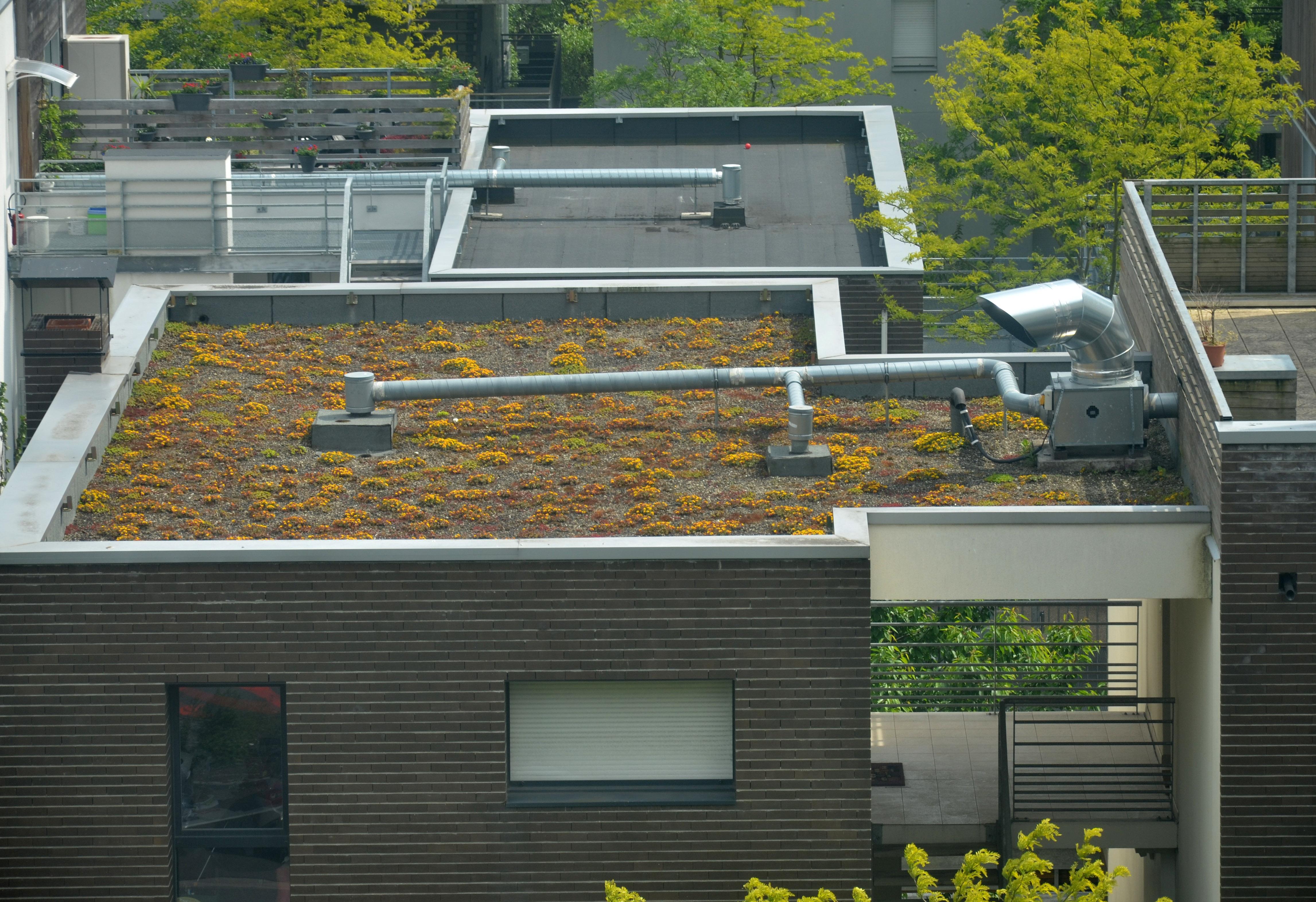 Végétaliser son toit ou sa terrasse